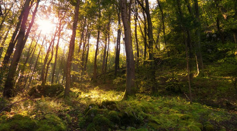 Warum es sich lohnt, Wildpflanzen kennen zu lernen und die kostbare Natur zu nutzen!