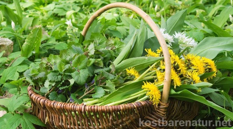 Wir lieben Wildpflanzen! Beim Sammeln von Wildkräutern, Heilpflanzen und Wildfrüchten gibt es aber ein paar wichtige Dinge, die du immer beachten solltest.