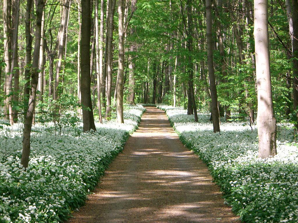 B rlauch kostbare natur for Auenwald leipzig