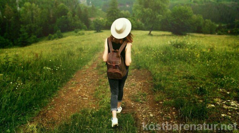 Die 4 wichtigsten Heilkräuter für Frauen und ihre