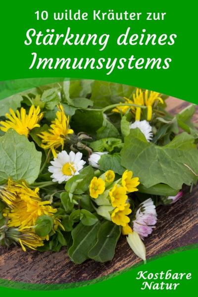 Viele Wildpflanzen sind reich an Vitaminen und Mineralstoffen. Diese Wildkräuter und Sträucher helfen dir besonders dein Immunsystem zu stärken.