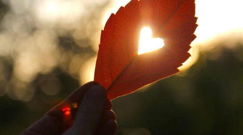 Für ein erfülltes Liebesleben bedarf es selten Medikamente. Die sanfte Medizin der Natur kann Mann und Frau gute Dienste erweisen - diese 4 Kräuter helfen