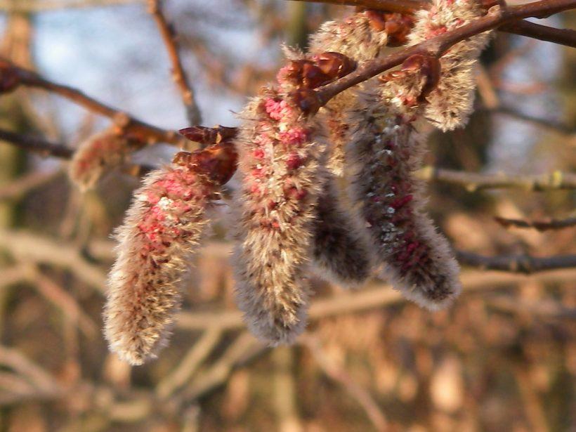 Die Natur erwacht und die ersten wilden Pflanzen können im Vorfrühling im Februar und März gesammelt werden. Diese Pflanzen solltest du nicht verpassen!