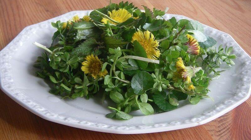 Im Vorfrühling sind einige Wildpflanzen schon in größeren Mengen zu finden, so dass es für einen leckeren Salat reicht. Hier sind fünf meiner Favoriten.