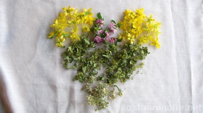Diese Pflanzen helfen beim regulieren des weiblichen Hormonhaushalts und machen das Leben etwas leichter!