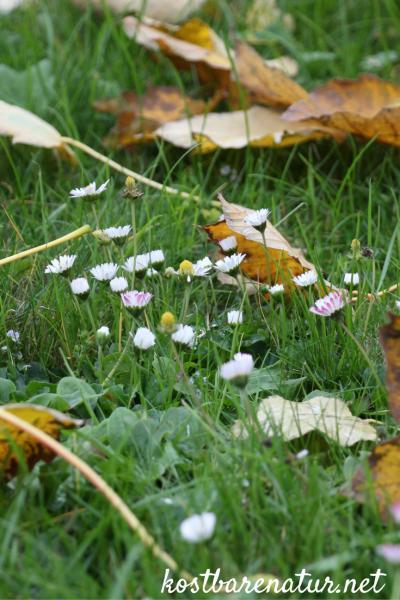 Diese heilsamen und vitalstoffreichen Wildkräuter kannst du auch im Herbst sammeln und zu gesunden Gerichten verarbeiten!
