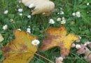 7 Wildkräuter, die du im Herbst sammeln und nutzen kannst
