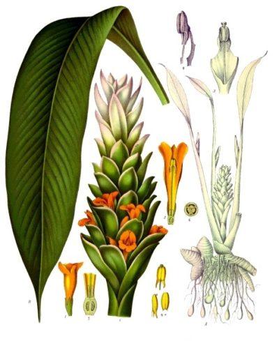 Kurkuma wirkt nicht nur entzündungshemmend, die gelbe Wurzel lässt sich auch gut zu herzhaften oder süßen Gerichten kombinieren. Egal, ob frisch oder getrocknet, schon der Duft von Kurkuma verführt in östliche Genusswelten.