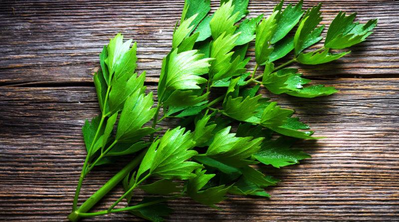 """Liebstöckel ist bekannt als """"Maggikraut"""", obwohl die braune Suppenwürze gar kein Liebstöckel enthält. Die grünen Blätter werden zum Würzen von Suppen und Eintöpfen eingesetzt und sollen sich positiv auf Verdauung und Harnwege auswirken."""