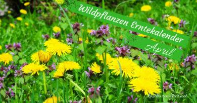 Diese Wildkräuter kannst du im April sammeln