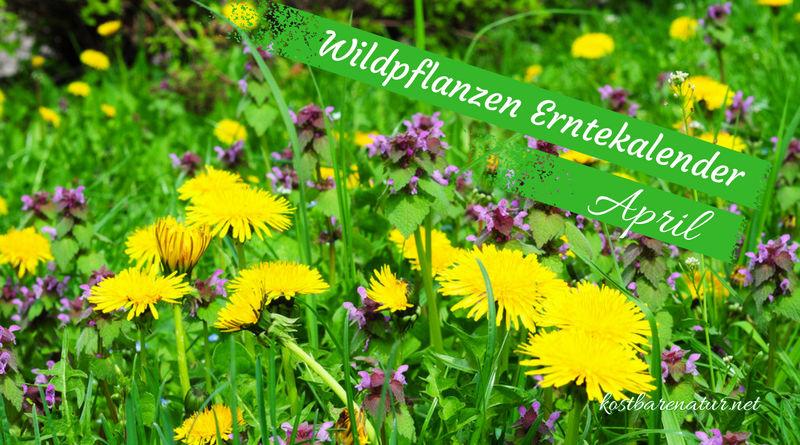 Finde heraus, welche Wildkräuter, Wildfrüchte und andere Schätze du zur Zeit finden und wie du sie in der Küche und für die Gesundheit nutzen kannst!
