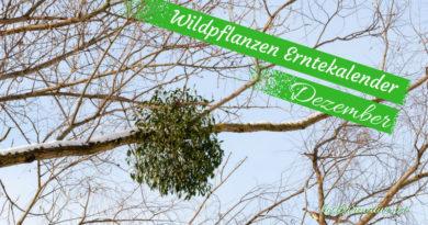 Diese Wildkräuter kannst du im Dezember sammeln