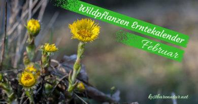 Diese Wildkräuter kannst du im Februar sammeln