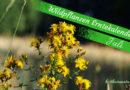 Diese Wildkräuter kannst du im Juli sammeln