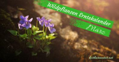 Diese Wildkräuter kannst du im März sammeln