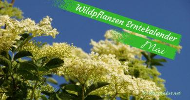 Diese Wildkräuter kannst du im Mai sammeln