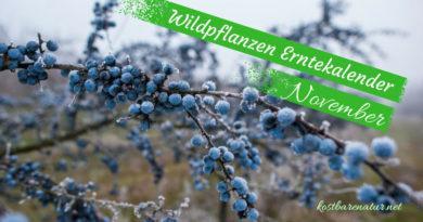 Diese Wildkräuter kannst du im November sammeln