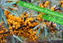 Diese Wildkräuter kannst du im Oktober sammeln