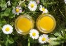 Gänseblümchensalbe – Balsam für Haut und Seele