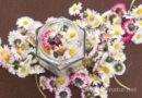 Gänseblümchen-Tinktur – gegen Akne, Mitesser und unreine Haut