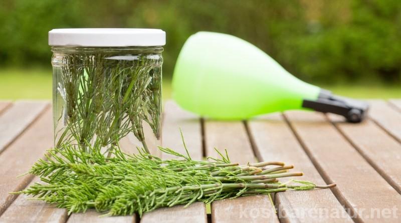 Schütze deine Pflanzen gegen Milben und Pilze durch diesen selbstgemachten Kaltauszug mit Acker-Schachtelhalm.