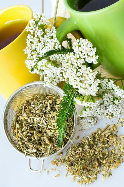 Die weit verbreitete Schafgarbe ist nicht nur schön anzusehen, sondern auch richtig gesund! Als Tee hilft sie bei Wunden, Magenkrämpfen, Menstruationsschmerzen und vielem mehr.