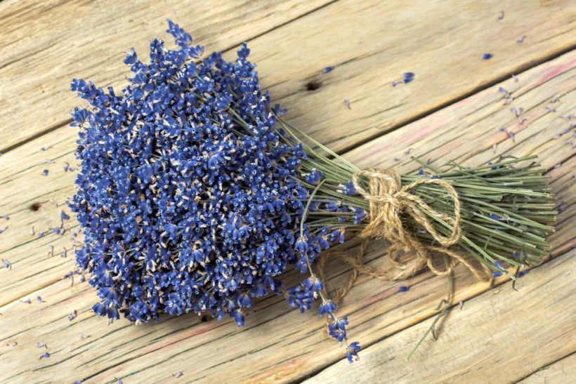 Alleskönner Lavendel: Nutze das vielseitige Heilkraut für erholsamen Schlaf, gegen Migräne, Hautprobleme und für deine Naturkosmetik.
