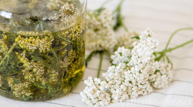 Die weit verbreitete Schafgarbe ist ein wirksamen Arzneikraut, das dir in einem Ölauszug bei Unterleibskrämpfen, Kopfschmerzen und Migräne helfen kann.