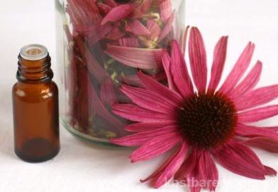 Echinacea-Tinktur zur Stärkung des Immunsystems