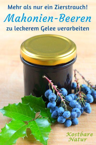 Überraschend lecker: Koche Saft aus den Beeren der häufig vorkommenden Mahonie ein und du erhältst nicht nur ein ungiftiges sondern auch fruchtig-saures Gelee.