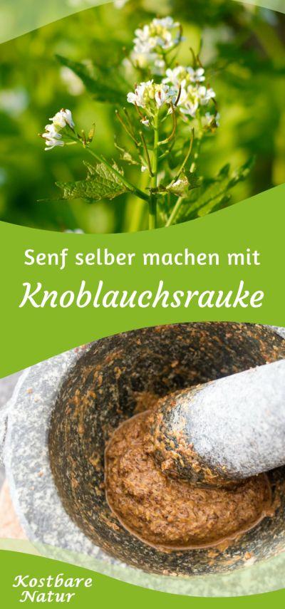 In Amerika ist die Knoblauchsrauke als Wilder Senf bekannt. Ihre Samen enthalten Senfölglykoside und schmecken ähnlich scharf. Finde heraus, wie du sie zu hausgemachtem Senf verarbeiten kannst.