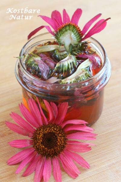 Ständig krank? Dieser Echinacea-Honig stärkt dein Immunsystem und beugt Erkältungskrankheiten vor!