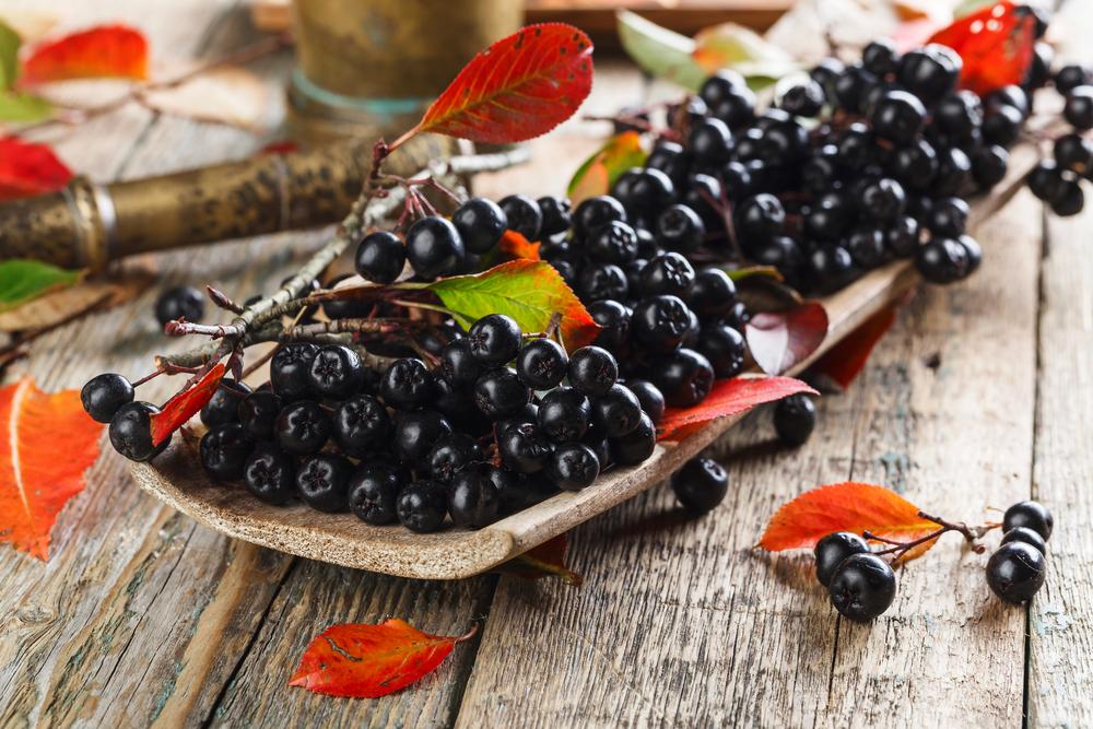 Schwarze Apfelbeere - Aronia - Kostbare Natur