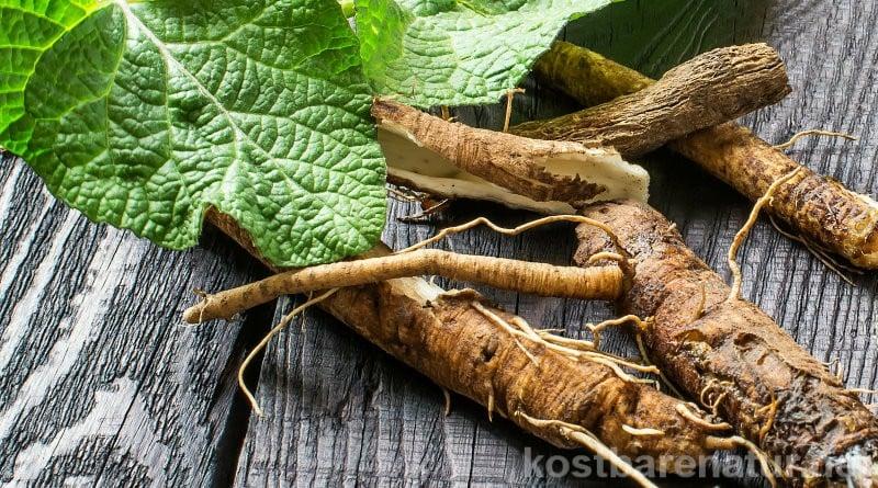 Im Winter können die Wurzeln dieser Wildpflanzen unser Immunsystem stärken und wichtige Vitalstoffen liefern.