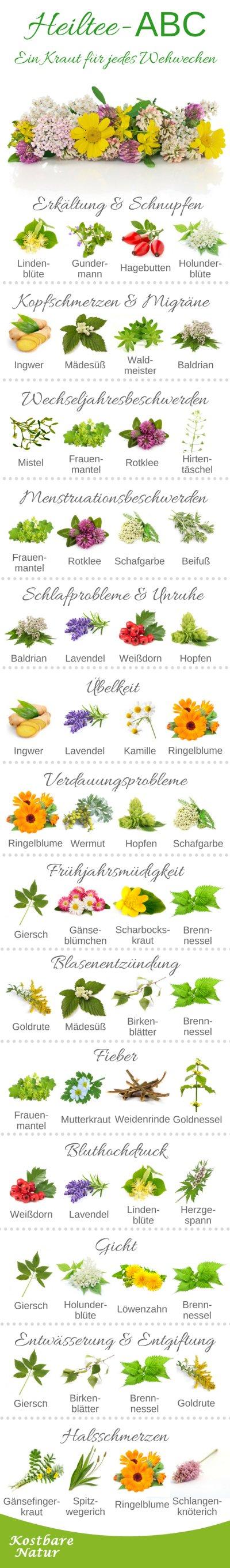 Eine Vielzahl von Beschwerden lässt sich auf natürlichem Wege durch Heiltees lindern. Finde heraus, welche Pflanzen bei welchen Beschwerden helfen.