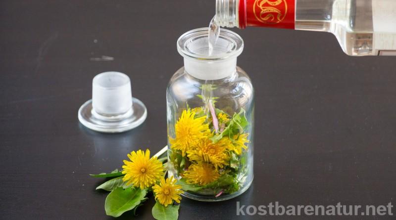 Löwenzahn ist eine starke Heilpflanze! Nutze ihn als heilkräftige Tinktur für deine Gesundheit gegen Frühjahrsmüdigkeit, Akne, unreine Haut und mehr.