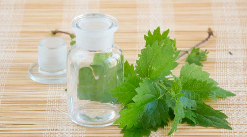 Die Brennnessel ist eine unterschätzte Heilpflanze! Als Tinktur kann sie Haarausfall und Schuppenbildung lindern und die Durchblutung fördern.