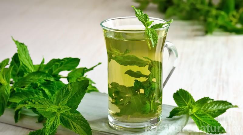 Die Pfefferminze ist eine völlig unterschätzte Heilpflanze! So können ihre Wirkstoffe dir und deiner Haut Gutes tun!