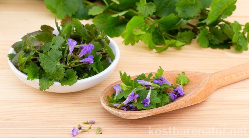Der unscheinbare Gundermann hat eine Menge zu bieten und kann sowohl in der Küche als auch für deine Gesundheit sehr nützlich eingesetzt werden.
