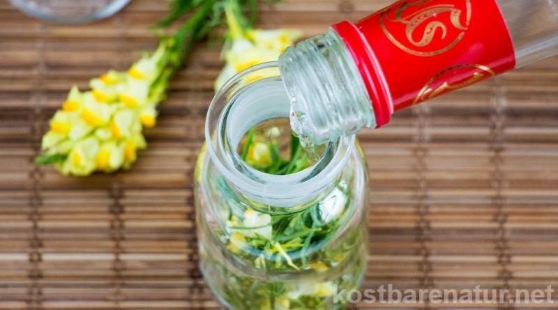 Das hübsche Leinkraut ist mehr als eine Zierpflanze! Eine Leinkrauttinktur kann Hämorrhoiden, Harnwegsentzündungen und Verstopfungen lindern.