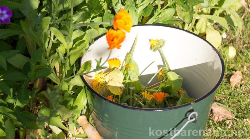 Ringelblumen sind nicht nur schön und pflegeleicht. Aus ihren Blättern und den welkenden Blüten kannst du noch eine pflanzenstärkende Jauche herstellen.