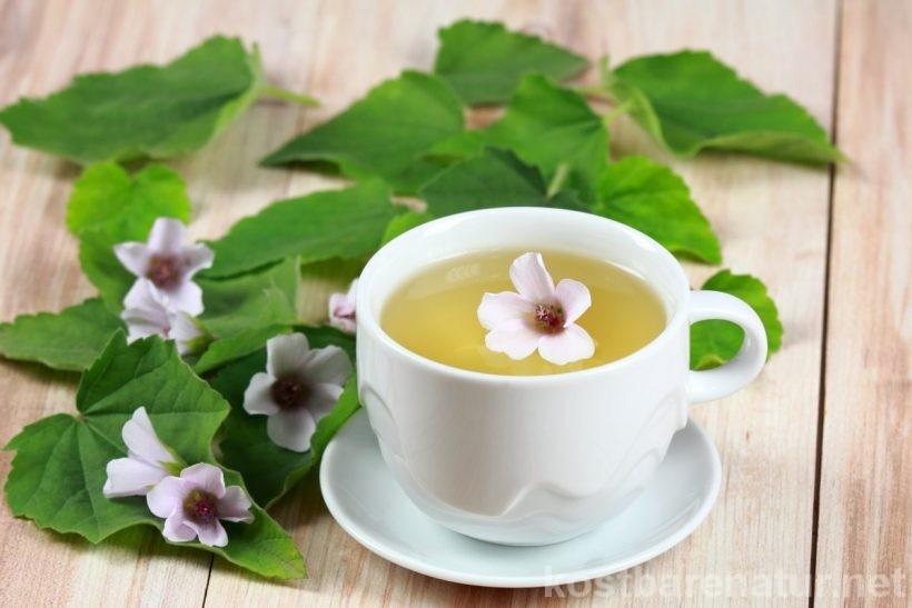 Der Echte Eibisch ist eine vielseitige Heilpflanze, die insbesondere in der Erkältungszeit sehr nützlich ist. Als Erkältungstee oder -sirup lindert er fast alle Erkältungsbeschwerden.