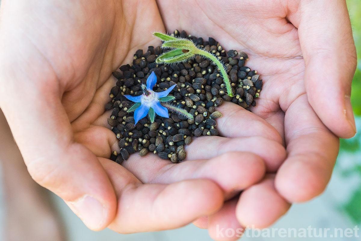 Wildkräuter gedeihen nicht nur in der freien Natur. Statt sie zu sammeln, kannst du ganz einfach einen Wildkräutergarten anlegen.