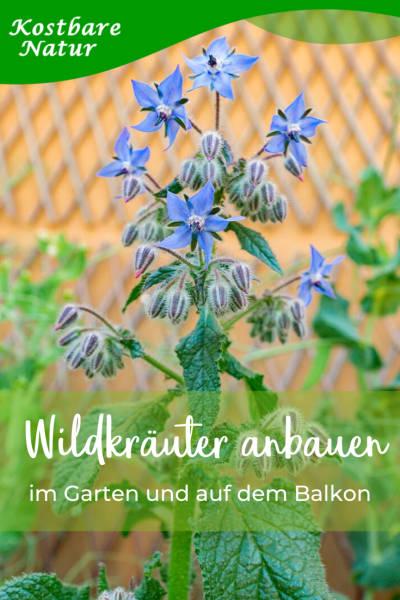 wildkraeutergarten-anlegen-1