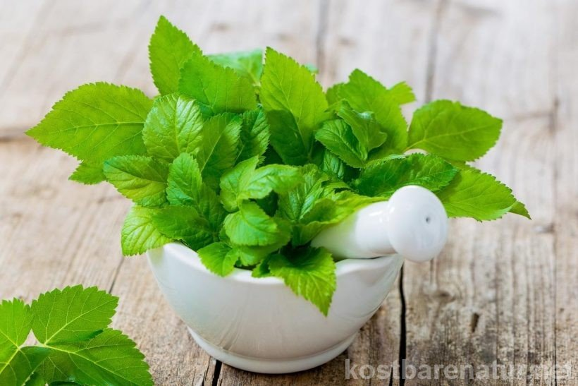 Giersch ist eine altbekannte Heilpflanze, die bei Gicht, Rheuma und Krampfadern eingesetzt wird und Entzündungen entgegenwirkt sowie das Gewebe kräftigt.