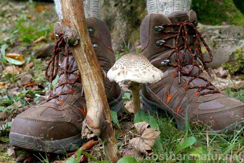Mit diesen Tipps zum Pilze-Sammeln bist du bestens auf einen Ausflug in die Pilze vorbereitet. Für einen schönen Tag in der Natur und köstliche Pilzgerichte!