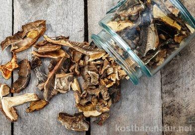 Pilze trocknen auf Vorrat: an der Luft, im Backofen und im Dörrgerät