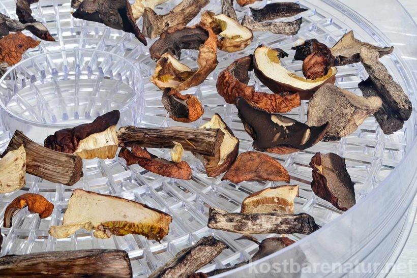 Pilze zu trocknen, ist eine wunderbar einfache Methode, selbst gesammelte Waldpilz-Schätze haltbar zu machen. Wie einfach das geht, erfährst du hier.