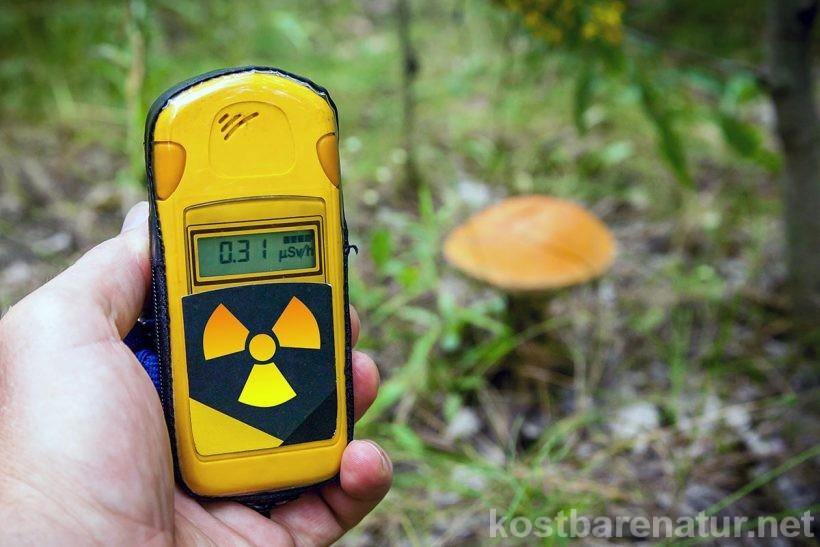 Je nach Region können Pilze auch heute noch radioaktiv belastet sein. So vermeidest du, Pilze mit hohem Gehalt an Cäsium-137 und anderen Schadstoffen zu sammeln.