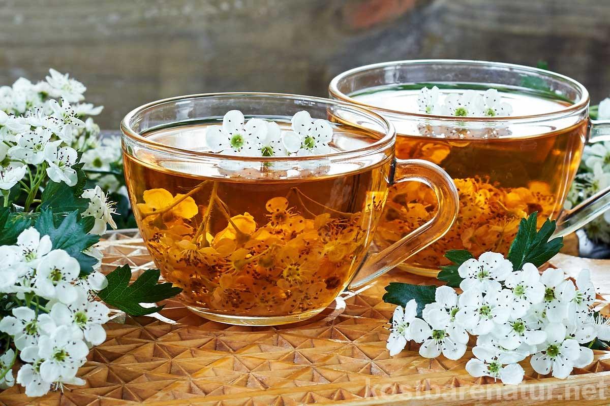 Ein Teeauszug mit Weißdorn kann aus Blättern, Blüten sowie Früchten hergestellt werden. Er unterstützt die Herzfunktion, wirkt stärkend und blutdruckregulierend.